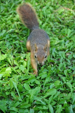 Kustur Club Holiday Village: Squirrel