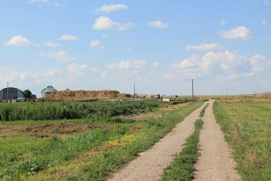 Circle View Guest Ranch: Farm Road