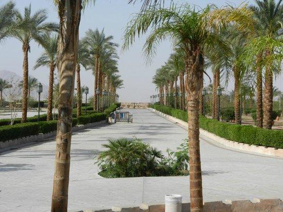 Al Mustafa Mosque: palm trees to the sea.