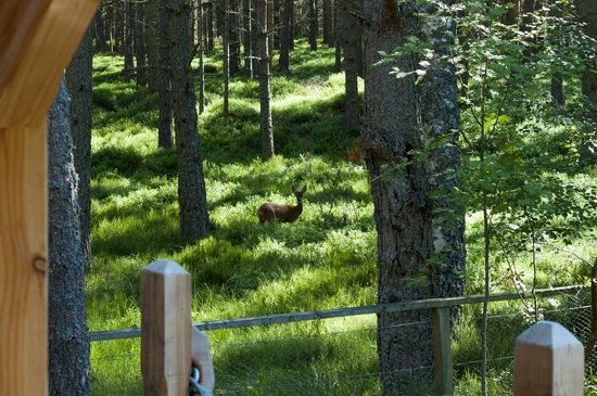 Lazy Duck Hostel, Eco Cabins & Lightweight Camping Ground: A deer - Photo taken from the veranda