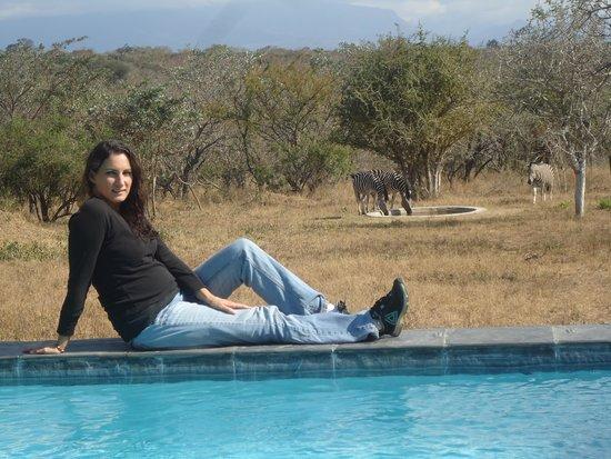 Bona Ntaba Self Catering Tree House Lodge : Watching zebra from the pool at the Bona Ntaba Lodge