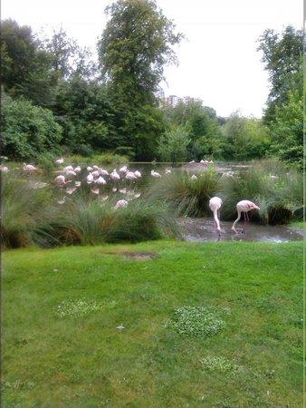 Tierpark Dählhölzli: flamingo ' s