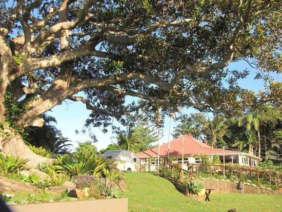 Fig Tree Restaurant: Fig Tree and accommodation