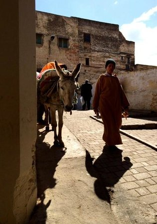 Fez Mellah : Donkeys everywhere in Fez