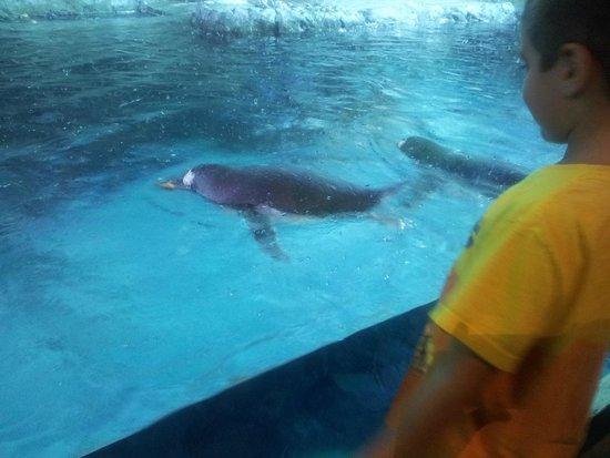 Seahorse Picture Of Loveland Living Planet Aquarium