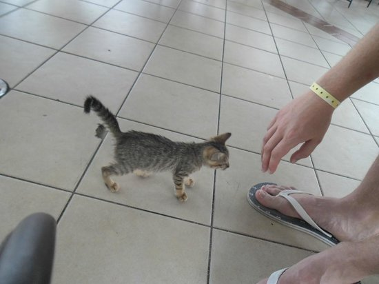 Melia Cayo Santa Maria: Little cutie that joined us at the snack bar. Lots of cats around!