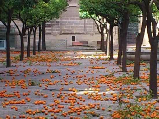 Catedral de Sevilla: Сад.