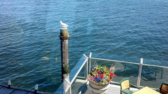 Salty's on Alki : Oh hello, seagull
