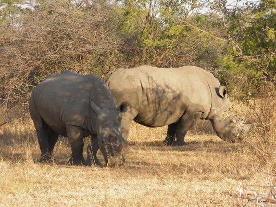 Tremisana Game Lodge: White rhino's
