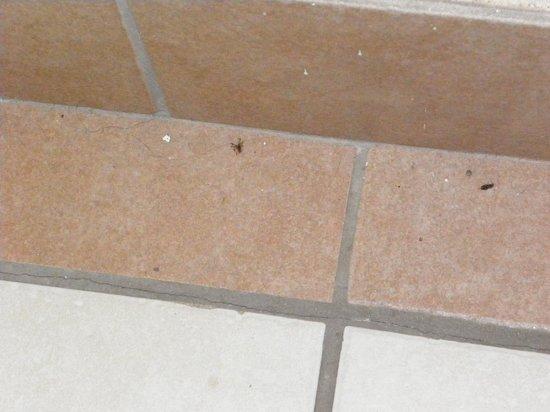 Knights Inn Michigan City: Bugs on Bathroom Floor