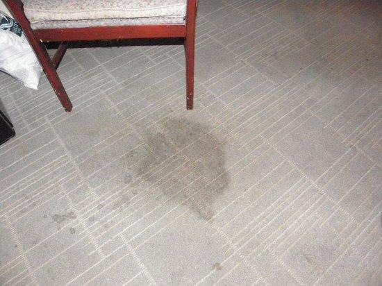 Knights Inn Michigan City: Stain on Carpet/Floor