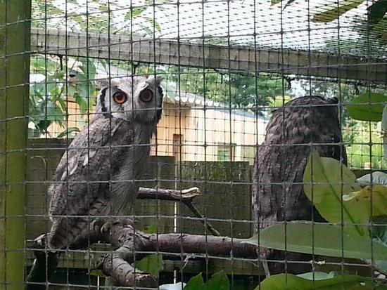 Axe Valley Wildlife Park: Owls