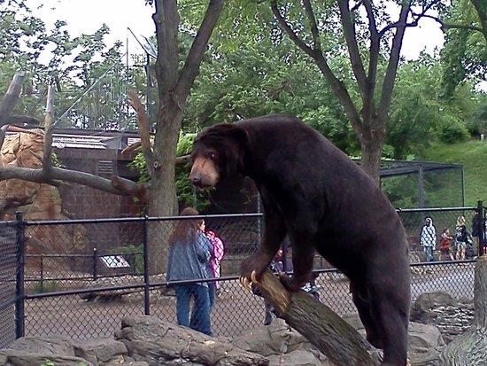 Henry Doorly Zoo: Sun bear