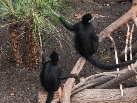 Henry Doorly Zoo: Lied Jungle