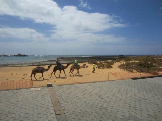 Barcelo Fuerteventura Thalasso Spa : Beach