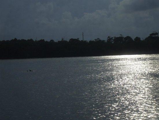 Jupiter, FL: dolphin sighting
