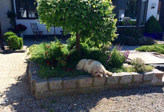 Hemmesaker Bed and Breakfast: Vakthunden :-)