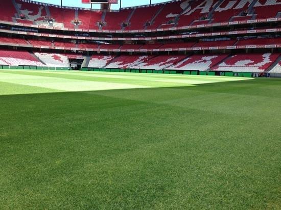 Estadio do Sport Lisboa e Benfica: la pelouse
