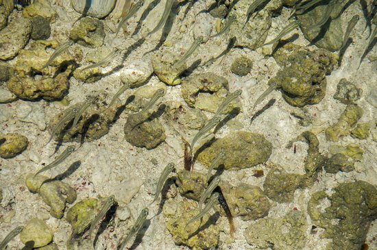 Cayo Bolivar: Peixes