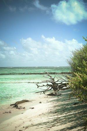 Cayo Bolivar: Vista da ilha