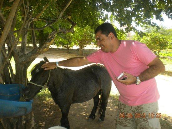 Thermas Hotel & Resort: o hotel possui animais