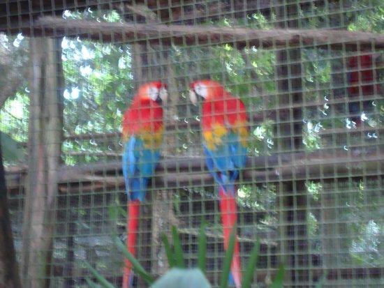 Tropical Manaus Ecoresort: zoológico