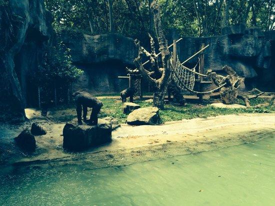 Zoo de Barcelona: Nice view!