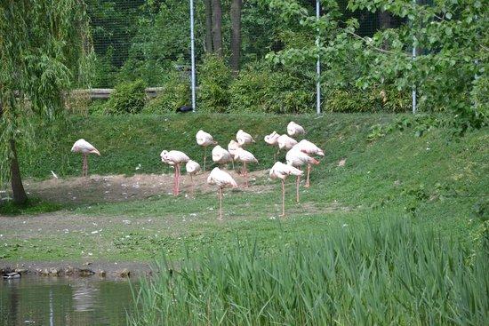 Tierpark Aachen: Зоопарк