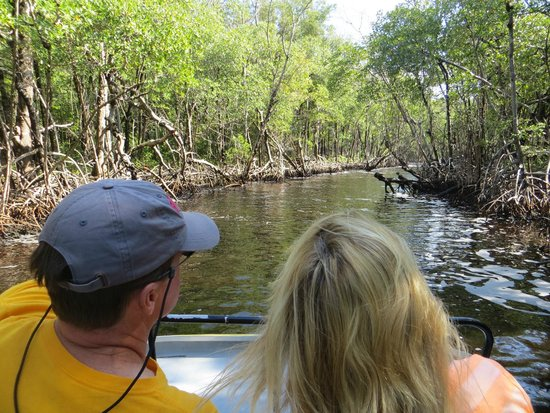 Speedy's Airboat Tours: Is that an alligator?