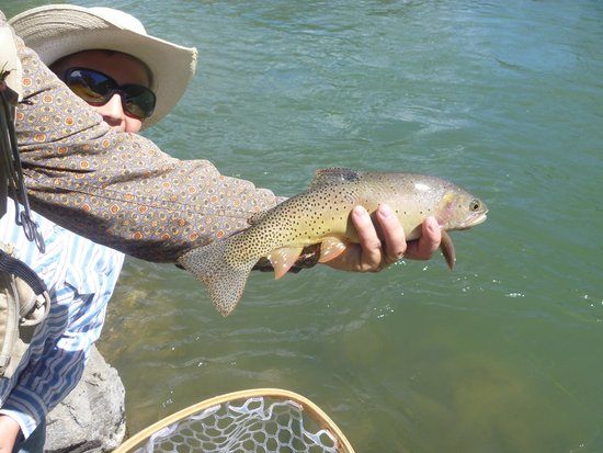 Skyline Guest Ranch and Guide Service: Great Fishing