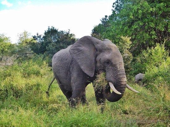 Tydon Safari Camp: Elephant in Sabi Sands