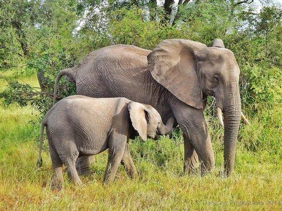 Tydon Safari Camp : Elephant Mom and Baby at Sabi Sands
