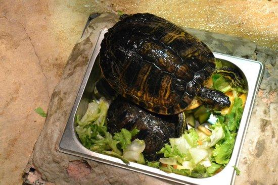 Aquatopia : Кормление черепах