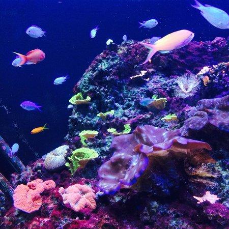 The Florida Aquarium: fish tank