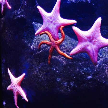 The Florida Aquarium: starfish