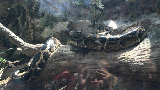 The Florida Aquarium: python