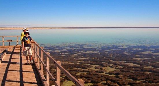 Hamelin Pool Marine Nature Reserve: Stromatolite boardwalk