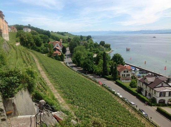 Sporthotel  Schoenblick : vineyards