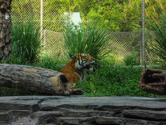 Jacksonville Zoo & Gardens: up close