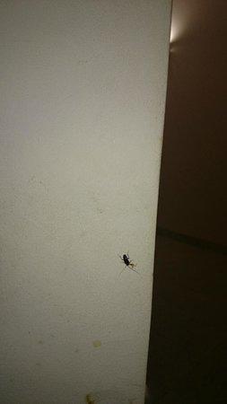 Golden Rose Hotel: بعض الحشرات الحشرات الموجوده فى الغرفه