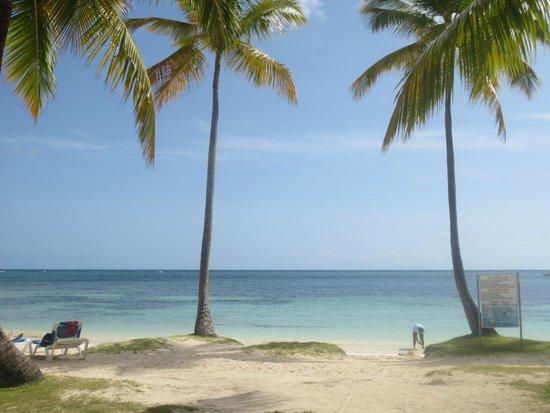 Grand Paradise Samana: beach
