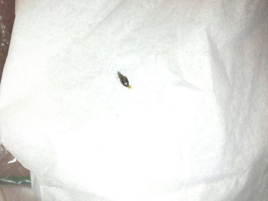Econo Lodge Alachua: Bug that ran over my pillow