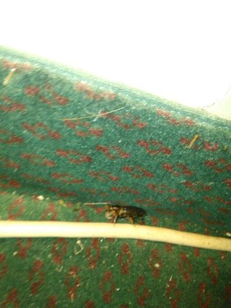 Econo Lodge Alachua : Dead bug near ac unit