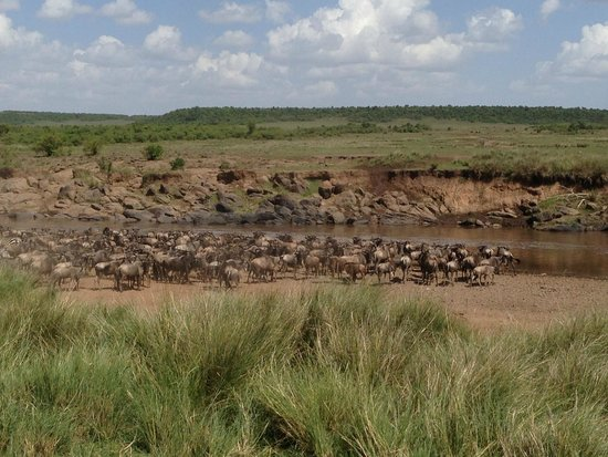 Naboisho Camp, Asilia Africa: Migration across the Mara River