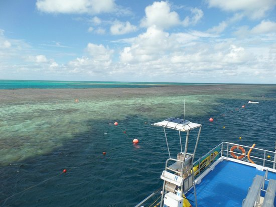 Cruise Whitsundays: Out on the Reef during low tide.