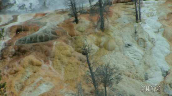 Mammoth Hot Springs: 6