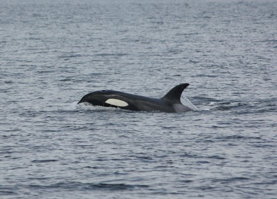 Outer Island Expeditions : Whales