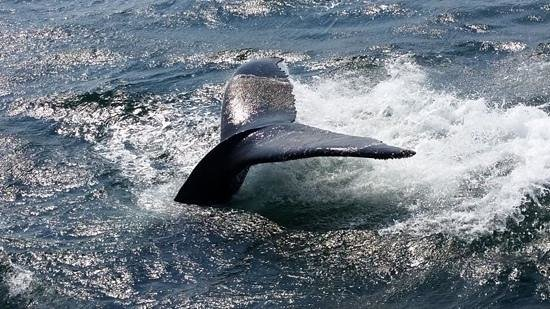 Hyannis Whale Watcher Cruises: Hyannis Whale Watch