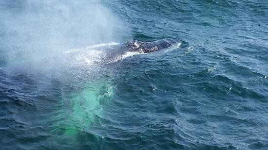 Hyannis Whale Watcher Cruises : Hyannis Whale Watch
