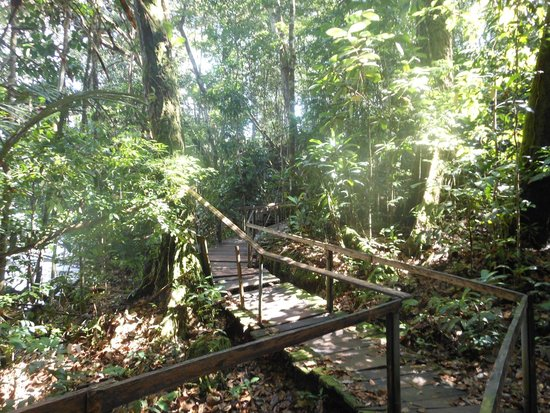 Cachoeira de Iracema: Caminho que leva à cachoeira